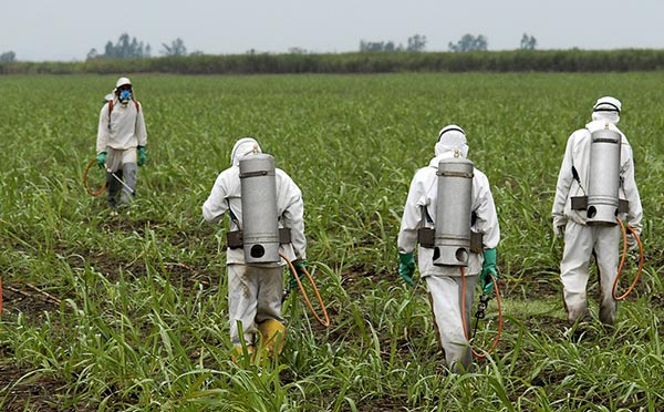 Why Don't We Mind Glyphosate in Our Food?